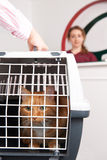 Mulher que toma Cat To Vet In Carrier Imagem de Stock Royalty Free