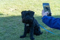 Mulher que toma a foto de seu cão fotos de stock royalty free