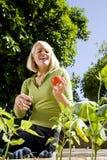 Mulher que trabalha no jardim vegetal no quintal foto de stock royalty free