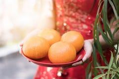 Mulher que veste o vestido vermelho do cheongsam que guarda uma placa das laranjas dentro imagem de stock