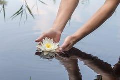 A mulher realiza no lírio de água bonito das mãos em um lago nas madeiras Imagens de Stock