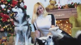A mulher smilling bonita senta-se no tapete e nos cursos um cão de puxar trenós, e ao lado dela é-se um outro cão de puxar trenós video estoque