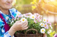 Mulher sênior com flores Foto de Stock