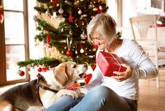 Mulher superior com seus presentes de Natal da abertura do cão Imagem de Stock