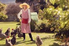 Mulher superior com suas galinhas no quintal fotos de stock royalty free