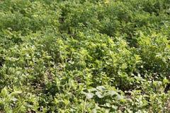 Mulher superior com trabalhos da ferramenta de jardinagem com mãos em seu jardim durante a plantação da mola das colheitas no sol foto de stock