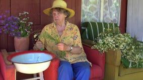 Mulher superior da avó com as ervas da flor da camomila da picareta do chapéu 4K video estoque