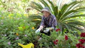 Mulher superior em negociações quadriculados da camisa às plantas ao trabalhar em seu jardim no quintal filme