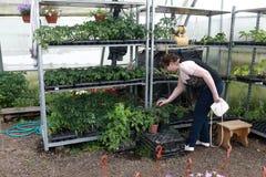 A mulher superior escolhe plantas imagem de stock