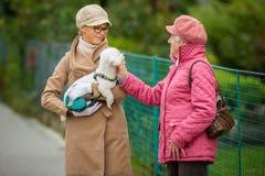 Mulher superior que anda seu cão pequeno com sua neta foto de stock royalty free