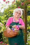 Mulher superior que guarda a cesta no jardim Fotografia de Stock