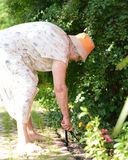 Mulher superior que trabalha no jardim. Foto de Stock Royalty Free