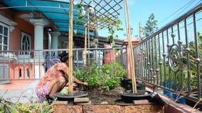 Mulher tailandesa que jardina no jardim vegetal na casa filme