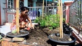 Mulher tailandesa que jardina no jardim vegetal na casa video estoque