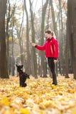 A mulher treina o cão preto no parque do outono Imagens de Stock Royalty Free