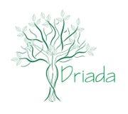 Mulher verde da árvore Logotipo do molde ilustração royalty free