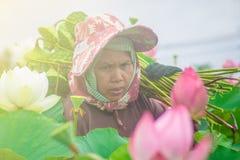 Mulheres asiáticas mais idosas imagens de stock royalty free