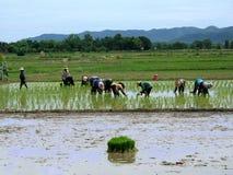 Mulheres de funcionamento em Tailândia Fotografia de Stock