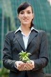 Mulheres de negócios com planta imagem de stock royalty free