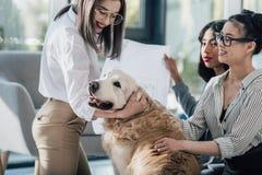 Mulheres de negócios novas que jogam com o cão do golden retriever no escritório moderno Fotografia de Stock Royalty Free