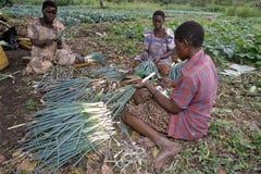 Mulheres do Ugandan que trabalham na horticultura Fotografia de Stock Royalty Free
