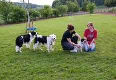 Mulheres e cães. Imagem de Stock
