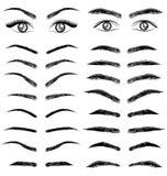 Mulheres e homem da sobrancelha dos olhos para o negócio dos cosméticos Imagem de Stock Royalty Free