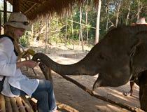 Mulheres européias novas que alimentam a vitela do elefante Fotos de Stock