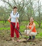 Mulheres felizes que plantam a árvore de fruta imagens de stock royalty free