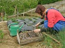 Mulheres no campo com o seedling plantado Fotos de Stock Royalty Free