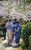 Mulheres que andam sob as flores de cerejeira foto de stock royalty free