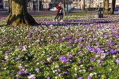 Mulheres que correm no parque com açafrões de florescência Imagens de Stock Royalty Free