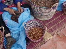 Mulheres que racham porcas do argão para produzir o óleo em Marrocos Fotos de Stock Royalty Free