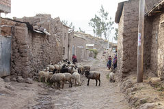 Mulheres que são com seus carneiros no celeiro Fotografia de Stock