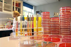 Mulheres que trabalham no laboratório Imagem de Stock Royalty Free