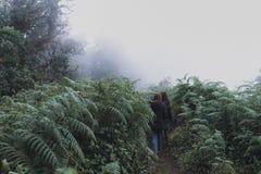 Mulheres que trekking na selva de madeiras da floresta tropical fotografia de stock