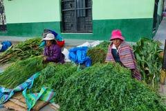 Mulheres que vendem plantas diferentes em Yungay, Peru imagem de stock royalty free