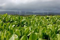 Mulini a vento dopo una tempesta Immagini Stock