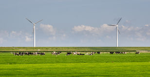 Mulini a vento e mucche fotografia stock