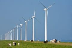 Mulini a vento e pecore Immagini Stock Libere da Diritti