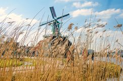 Mulini a vento olandesi in erba asciutta a Immagine Stock Libera da Diritti