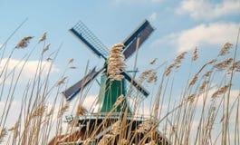 Mulini a vento olandesi in erba asciutta Immagine Stock