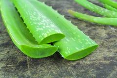 Mulino di barbadensis di Vera Aloe dell'aloe della fetta , Cactus della stella, aloe, Aloin, Jafferabad o le Barbados Immagini Stock