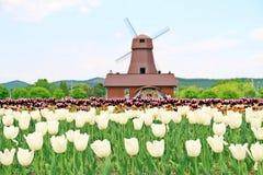 Mulino a vento all'azienda agricola del tulipano Fotografia Stock