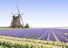 Mulino a vento all'azienda agricola della lampadina del tulipano Fotografie Stock Libere da Diritti
