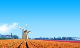 Mulino a vento all'azienda agricola gialla della lampadina del tulipano Immagini Stock Libere da Diritti
