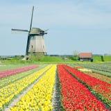 Mulino a vento con il campo del tulipano fotografia stock libera da diritti