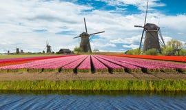 Mulino a vento con il campo del tulipano in Olanda Fotografie Stock Libere da Diritti