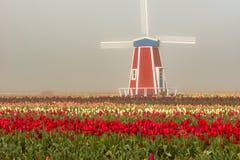 Mulino a vento decorativo nel campo del tulipano Fotografia Stock Libera da Diritti