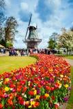 Mulino a vento decorativo nel parco di Keukenhof Turisti che camminano nel campo variopinto del tulipano del fiore Fotografie Stock